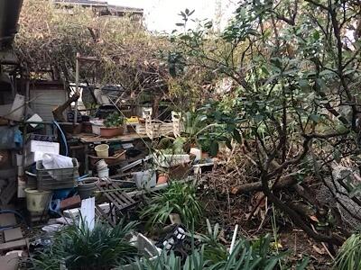 ゴミ屋敷 お庭