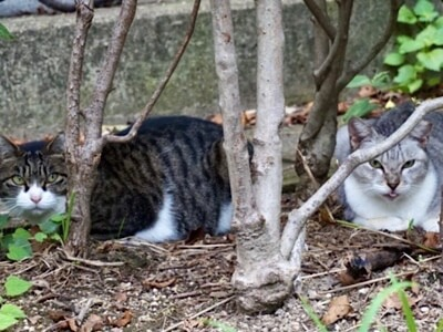 ノラ猫が空き家に住み着いています