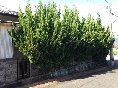 両親が入院、老人ホームへ入居後 誰も住まなくなった実家(空き家)。 2年程で、庭木は思っていた以上 に成長します。 やがて、お隣様の敷地まで枝が伸び 苦情の電話がかかってくることも… 道路まで伸びてしまった庭木。 家が見えなくなるほど伸びた庭木。 お隣の敷地内まで伸びた庭木。 当社では、庭木の剪定・伐採作業も 家の片付けとともに行っています。